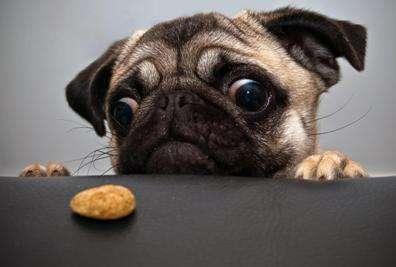 Идеальный сухой корм для собак