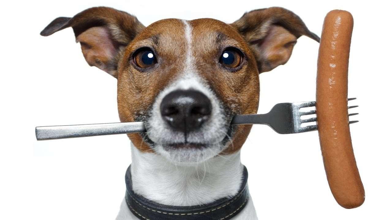 Какой сухой корм для собак самый лучший?