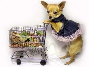 На что обратить внимание в составе сухого корма для собак?